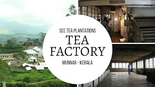 Tea factory visit adds more essence to your Munnar trip