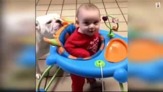 САМЫЕ МИЛЫЕ СОБАКИ И ДЕТИ заразительный смех Дети и добрые и умные собаки лучшая подборка  2019