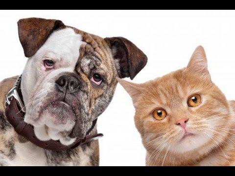Dog X Cat The Best
