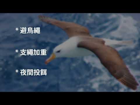 拯救信天翁 – 如何減少金槍魚延繩漁業誤捕海鳥(閩南語版) Albatross Conservation in fisheries (Taiwanese Hoklo)