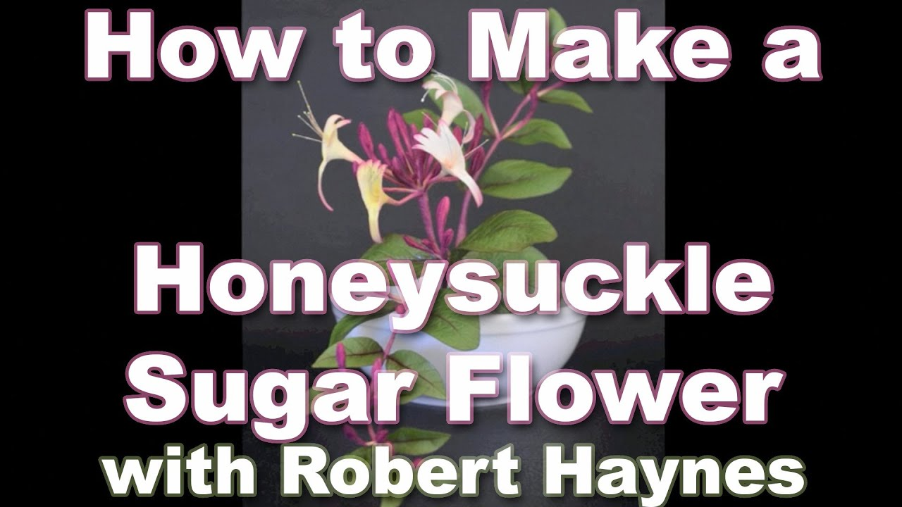 how to make honeysuckle tincture