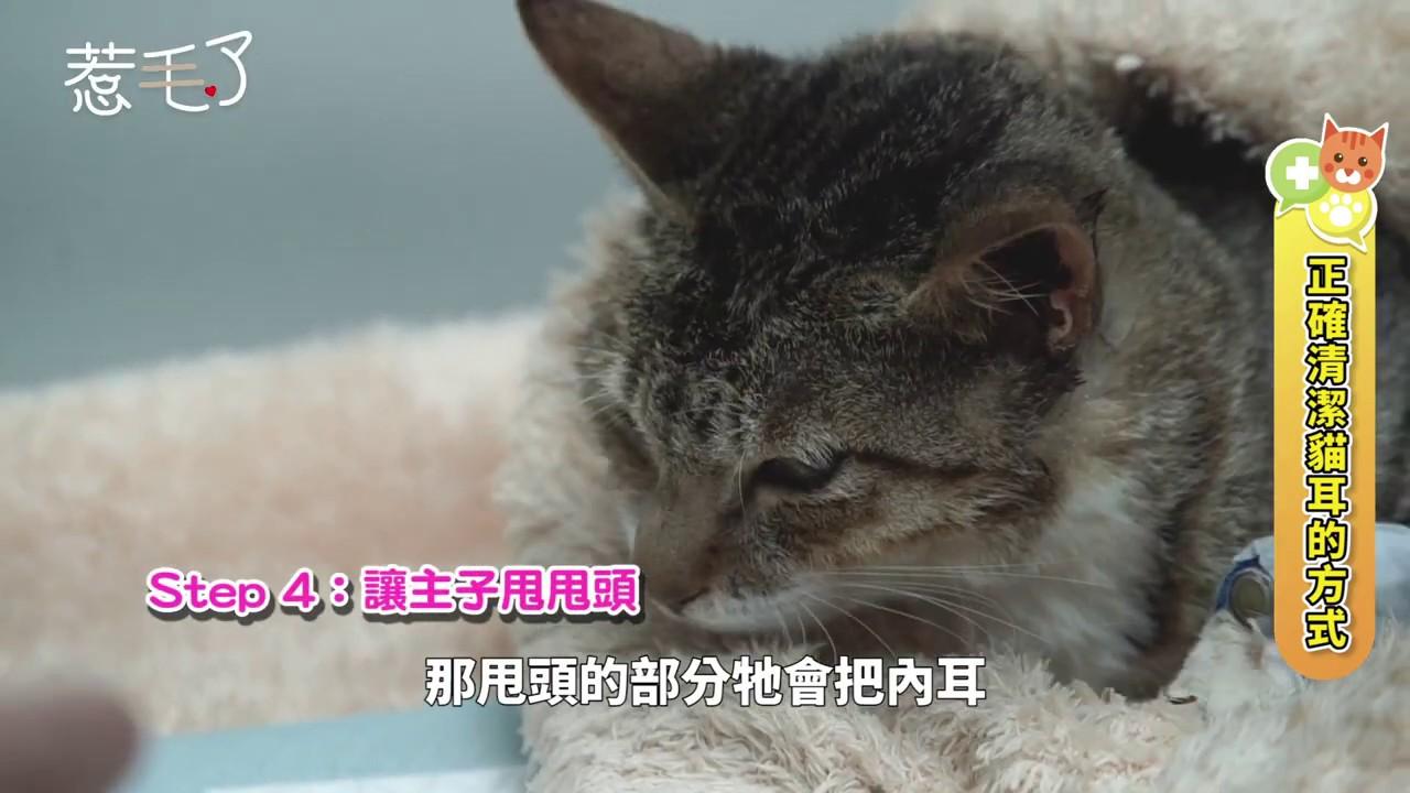 20191126掌握貓咪耳朵清潔正確方法!向疾病SAY NO - YouTube
