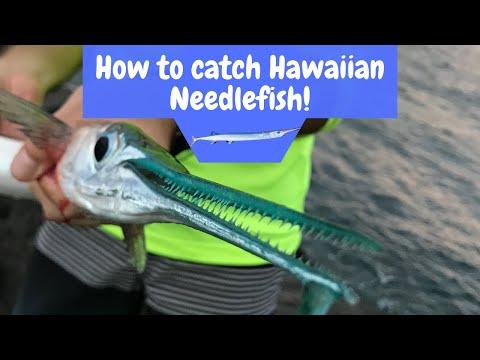 How To Catch Hawaiian Needlefish!