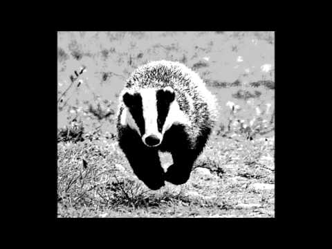 Sophisticated Badgers six jam session