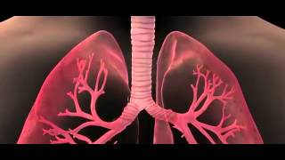 Repeat youtube video Air Pollution & Lung Cancer Documentary