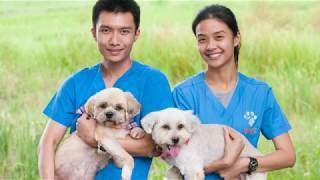 WVS Thailand Rescue Grace and Celia