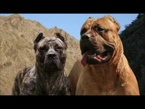 Топ 10 самых злых пород собак в мире!!!