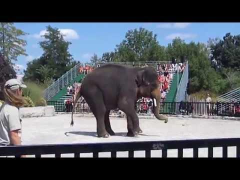 Amazing Elephant Show African Lion Safari Canada