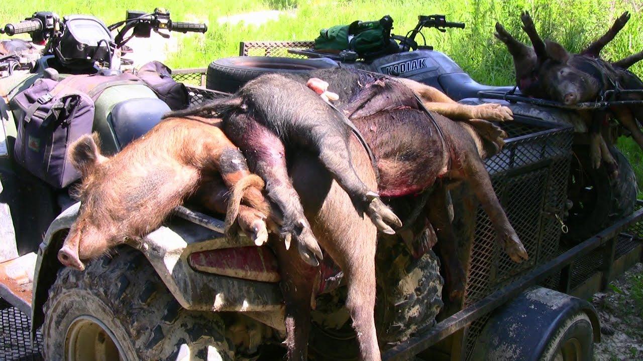 R Hogs WILD HOGS DIE! ...