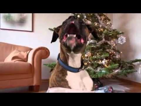Il cane che canta canzoni  di Natale