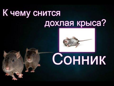Готовьтесь к ссоре с друзьями если животное погрызло вас до крови, то с родственниками.