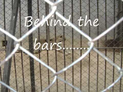 Visit to Delhi Zoo & Old Fort