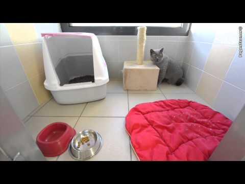 CAT SUITES à Niort L'hôtel Pour Chats