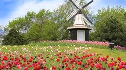 Urlaub in Holland mit einem Ferienhaus von FeWo-Direkt.de