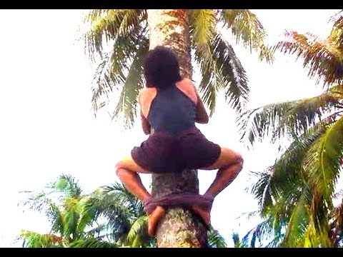 HOW TO CLIMB A COCONUT TREE ? (and pick up coconuts :)