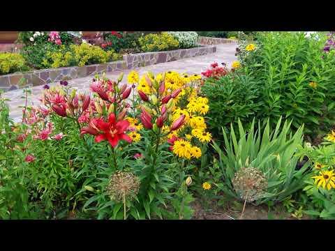 Сад в июле: клематисы, лилии и розы.