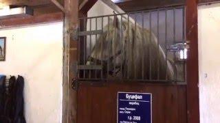 Белокуриха. Породистые лошади.(через YouTube Объектив., 2016-04-10T16:40:19.000Z)