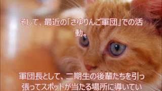 乃木坂46松村沙友理さんへのファンレター http://akb48fanletter.com/ma...