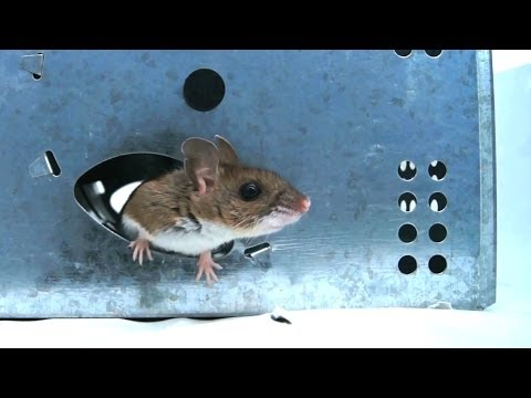 NEW! - JT Eaton Wind-Up Mouse Trap Test & Review