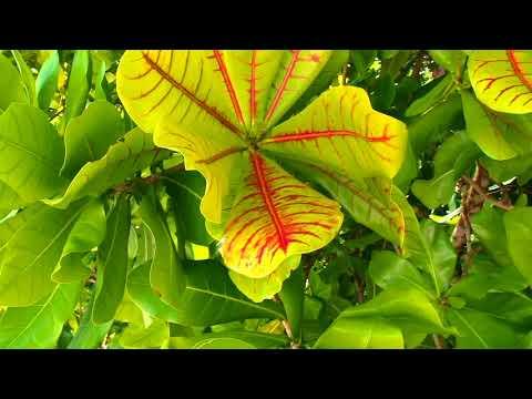 Palau Micronesia V2 Diving Video Part2  Paul Ranky  HD Video