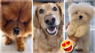 Puppies Doing Funny Things Tik Tok ~ Cutest Dogs TIKTOK Compilation ~ Fluppy
