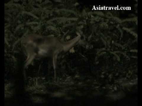 night-safari,-singapore-by-asiatravel.com