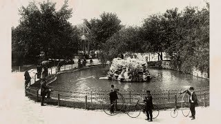 From Swans to Science: 150 Years of Lincoln Park Zoo