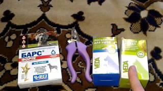 Что необходимо купить перед приобретением собаки/щенка?