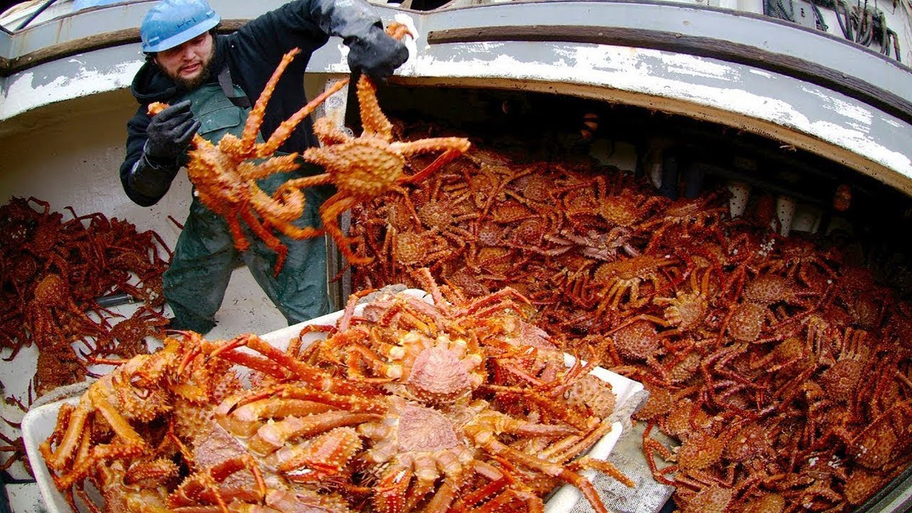 Amazing Catch Hundreds Tons Alaska King Crab on the Sea - Amazing Automatic Crab Processing Machines