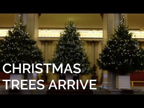The Christmas Trees have arrived at Buckingham Palace!
