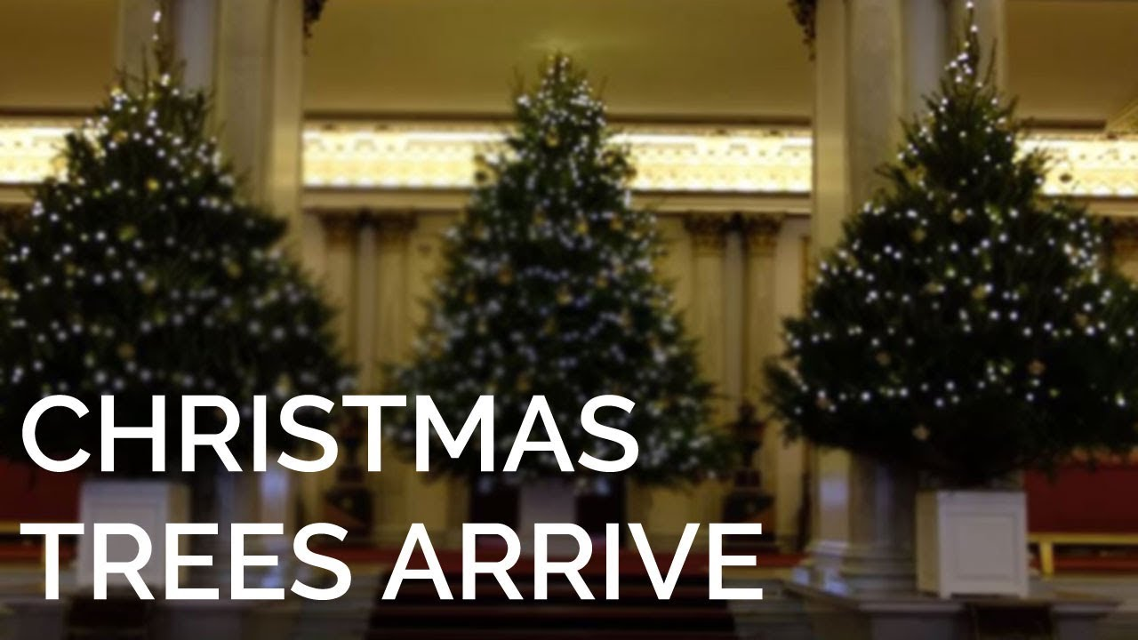 Christmas Trees Images.The Christmas Trees Have Arrived At Buckingham Palace