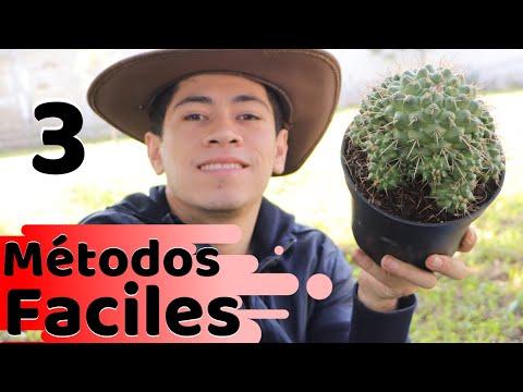 como-acelerar-el-crecimiento-de-tus-cactus-  -huerto-citadino