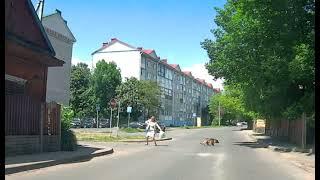 Собака напала на женщину в Слуцке