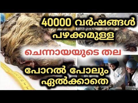 40000 വർഷം പഴക്കമുള്ള ചെന്നായായുടെ തല | Churulazhiyatha Rahasyangal | Breaking news | trending now