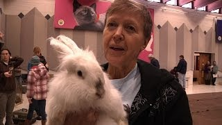 Hop, Jump and Play - Rabbit Agility Documentary - Cute!