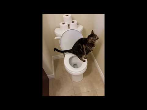 Cat using toilet and Flushes 1/2