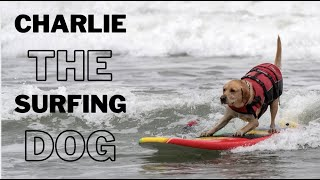 Champion Surfing Dog Gives The Most Inspiring Life Advice