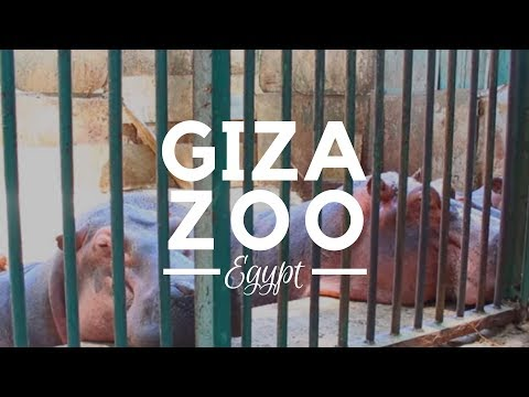 The Giza Zoo, Cairo, Egypt - Things to Do in Egypt. An 80 acre zoo in the heart of Giza, Cairo