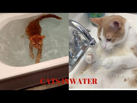 *FUN AND SMART CATS ON WATER COMPILATION "