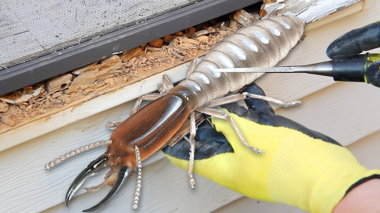 Wet Rot Or Termites Youtube