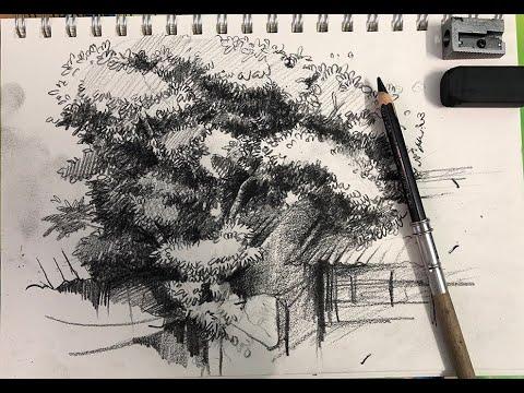 Hướng dẫn chi tiết vẽ cây bằng chì đen – Ký họa căn bản cho người mới bắt đầu