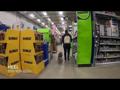 "Mini Bull Terrier ""Harley"" l Amazing Transformation l Hampton Roads Dog Trainers"