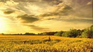 Effortless-Effort: Finding Spiritual Clarity ~ Adyashanti