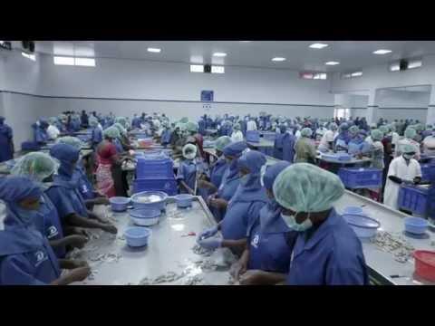 AP FOOD PROCESSING Corporate Film | Corporate Film Making Companies in Bangalore @ scintilladigi.com