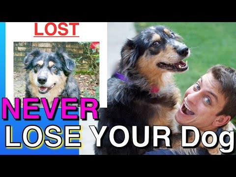 How to NEVER Lose your Dog & What to Do if you Do (This Could SAVE your Dog's LIFE!)