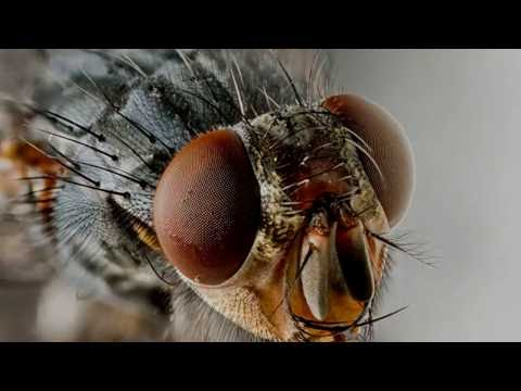 Охота за насекомыми. Макрофотография