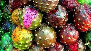 Gambar cover Cultivo de Pitaya con Buenas Prácticas Agrícolas - TvAgro por Juan Gonzalo Angel