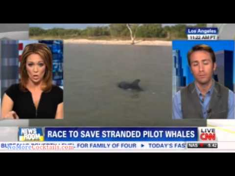 15-20 pilot whales moved into deep water off Florida's Gul Coast