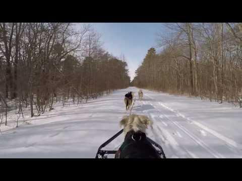 Dog Sledding 2-10-17