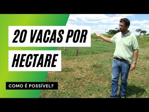Manejo de Pastagem: Capim Tifton (lotação de 20 vacas/hectare)
